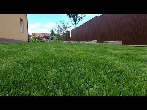 #7 Супер-газон своими руками - густая зеленая трава, успешный результат