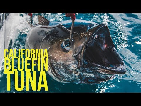 California Bluefin Tuna W/ Johnny Nguyen - Big Tuna Dreams Part 6