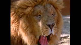 Baby Noah: Animal Expedition, Part 1 | Animal Videos for Kids | Baby Einstein