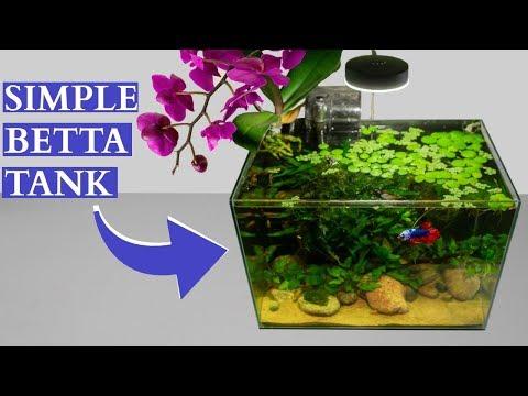 Simple Betta Tank Maintenance: 4 Month Update!