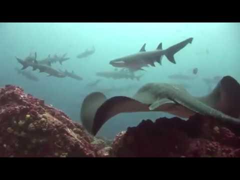 Liveaboard Life: The Okeanos Aggressor I and Okeanos Aggressor II