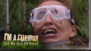 Ferne, Spencer and Vicky Face Terrifying Bushtucker Trial | I'm A Celebrity... Get Me Out Of Here! thumbnail