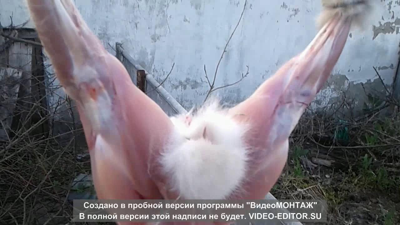 картинка убой кроликов способ