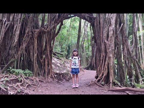 Hiking MANOA FALLS HD - Oahu Adventure - Honolulu Hawaii