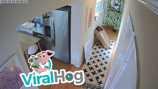 Curious Cat Gets Stuck in Box and Escapes || ViralHog