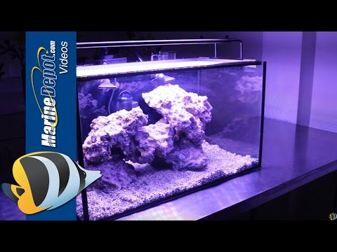 Tank Hacks: Easy Upgrades for Your Innovative Marine Fusion Nano 20