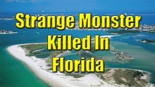 Strange Monster Killed In Florida