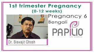 First Trimester Pregnancy. Pregnancy 6 Bengali