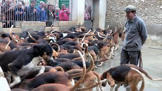Feeding the Hounds at France's Châteaux Cheverny
