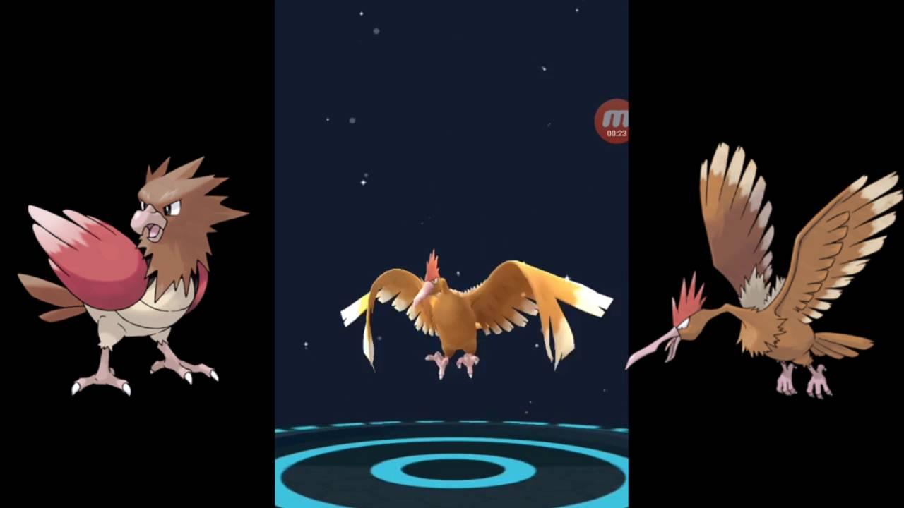 Sparrow evolve to Ferow ! POKEMON GO - YouTube