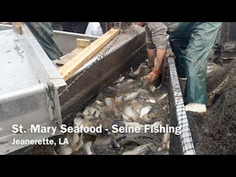 St. Mary Seafood – Seine Fishing