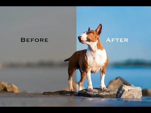 Folge 13: Farbtemperatur ändern / Tristes Grau Zu Strahlendem Blau Verwandeln - Hundefotografie