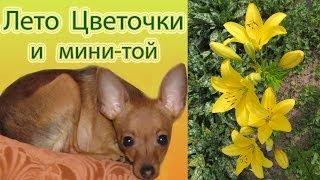 Лето: мамины цветочки и мини-той