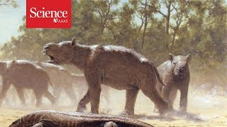 Giant wombatlike creatures migrated across Australia 300,000 years ago