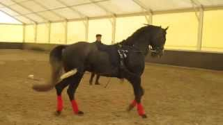 Выездка лошади видео уроки. Обучение молодой лошади.