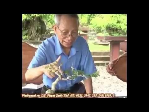 svc bonsai: Kỹ thuật tạo hình cây cảnh nghệ thuật