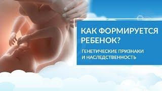 Как формируется плод ребенка? Генетика. Вредные привычки беременных