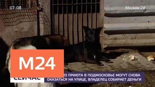 Собаки из приюта в Подмосковье могут снова оказаться на улице - Москва 24
