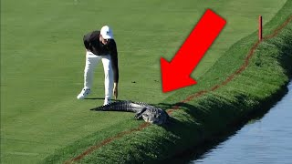 11 لقاء مع حيوانات مفترسة داخل ملعب الغولف..!!