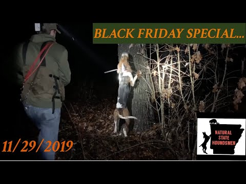 Coon Hunting On Black Friday 2019