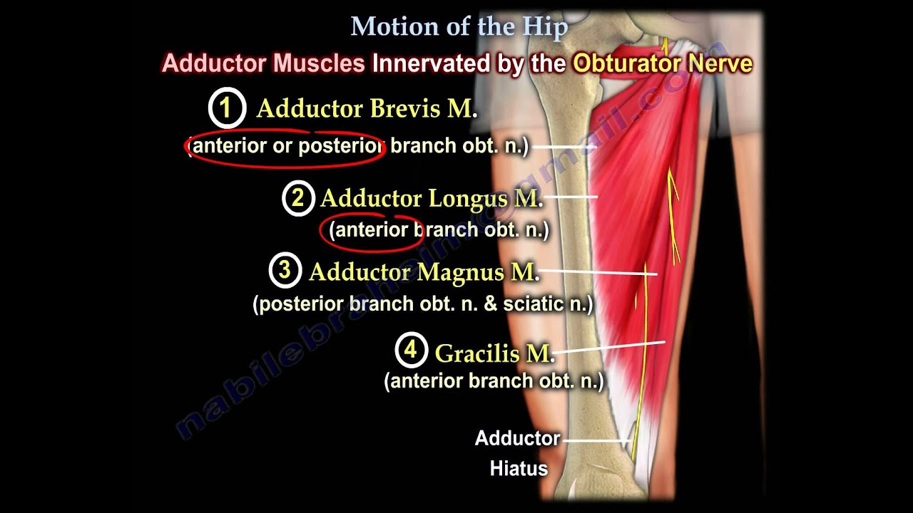 Anatomy of Movement Of The Hip - Everything You Need To Know - Dr ...