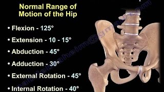 Anatomy of Movement Of The Hip - Everything You Need To Know - Dr. Nabil Ebraheim