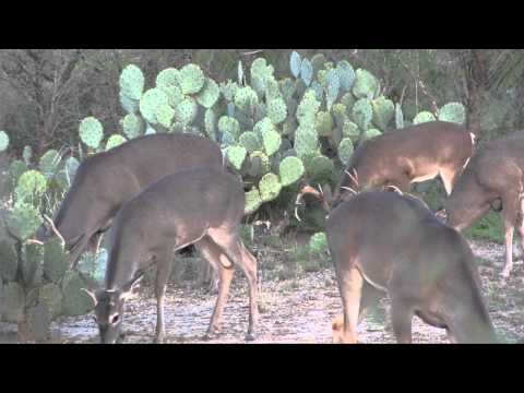 Holden Pasture Deer Lease South Texas 2013-2014 Part 2