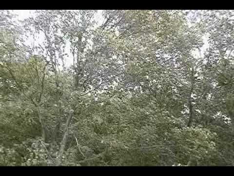 Wind Storm In Cincinnati