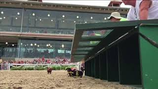 Video Wiener Dog Races at the Fair Grounds download MP3, 3GP, MP4, WEBM, AVI, FLV Agustus 2018