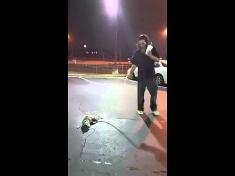 Crack head Puts Possum On A Leash(Wesley Chapel) - YouTube