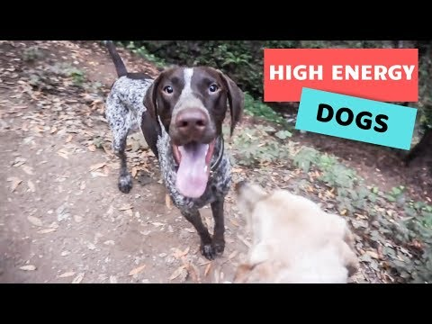 Hiking with a high energy dog