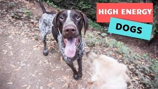 Hiking with DOGS // GoPro