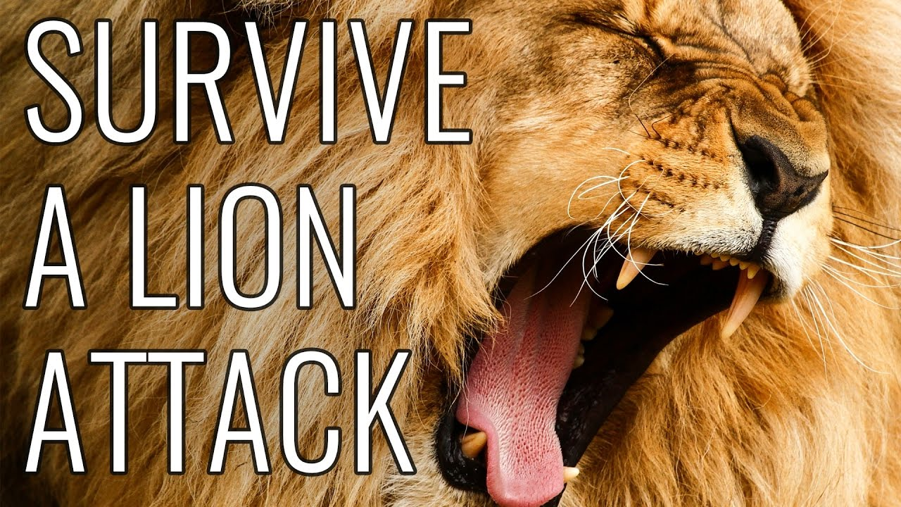 survive a lion attack epic how to youtube