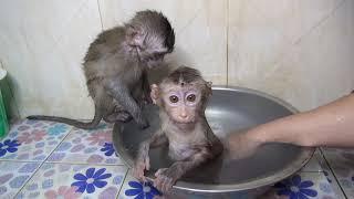 What Baby Monkey Too bite Baby Monkey Google