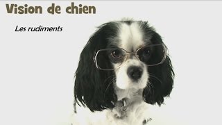 Video Vision de chien – Comment voient nos chiens? download MP3, 3GP, MP4, WEBM, AVI, FLV Desember 2017