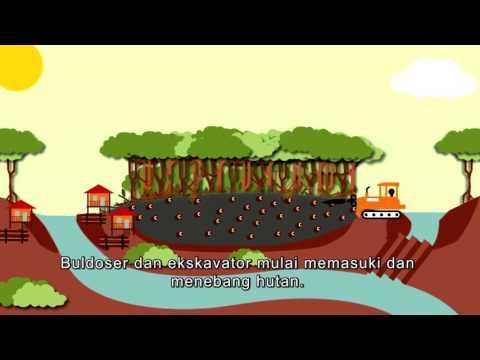 Pentingnya Lahan Gambut (The Importance of Peatlands)