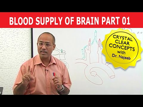 Blood Supply to Brain - Neuroanatomy - Part 1/11