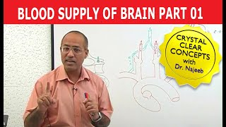 Blood Supply to Brain 1/11