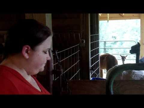 Visiting the Alpacas