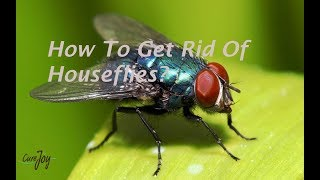 How To Get Rid Of Houseflies?