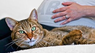 cat-reacts-to-pregnancy-do-cats-reveal-baby-gender