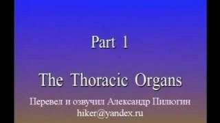 Анатомия сердца и легких. Видеоатлас Акланда. Фильм 6, часть 1. Массаж и Мануальная терапия