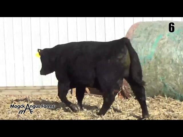 Mogck Angus Farms Lot 6