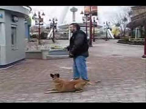 Dave Mcmahon S Dog Training Academy