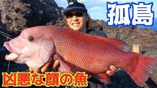 見渡すと360度海!高級魚イシダイを狙う!