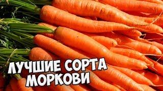 видео Лучшие сорта свеклы для средней полосы России