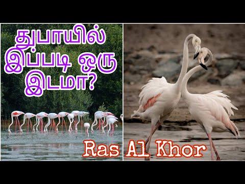 Dubai, Must visit place, Ras Al Khor wildlife sanctuary, Numerous lovely Birds, Dec 2019, Tamil Vlog