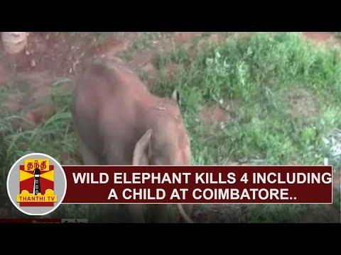 Wild Elephant kills 4 including a child at Coimbatore | Thanthi TV