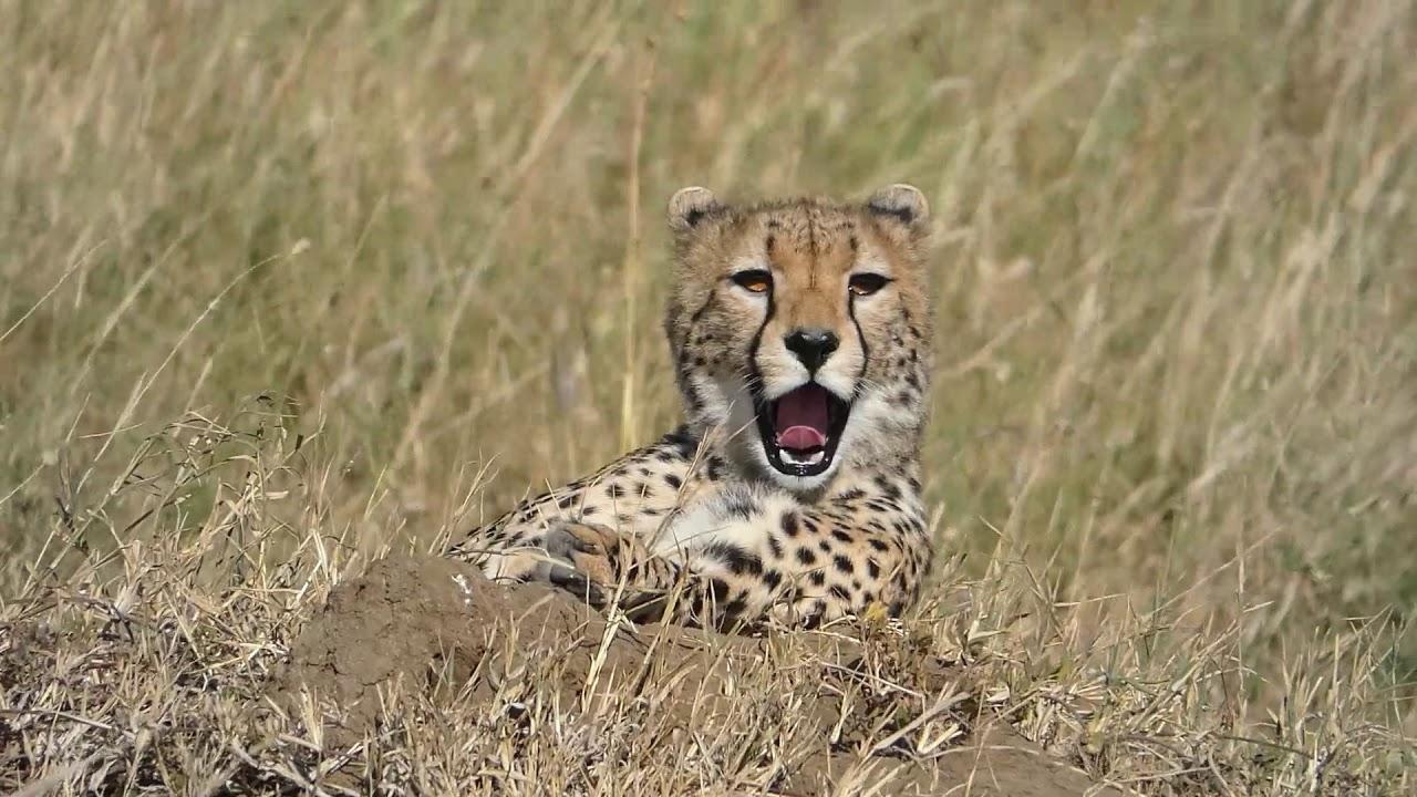 Abenteuer Afrika / Tanzania Safari 2018 - Serengeti , Lake Manyara, Ngorongoro Crater, Zanzibar