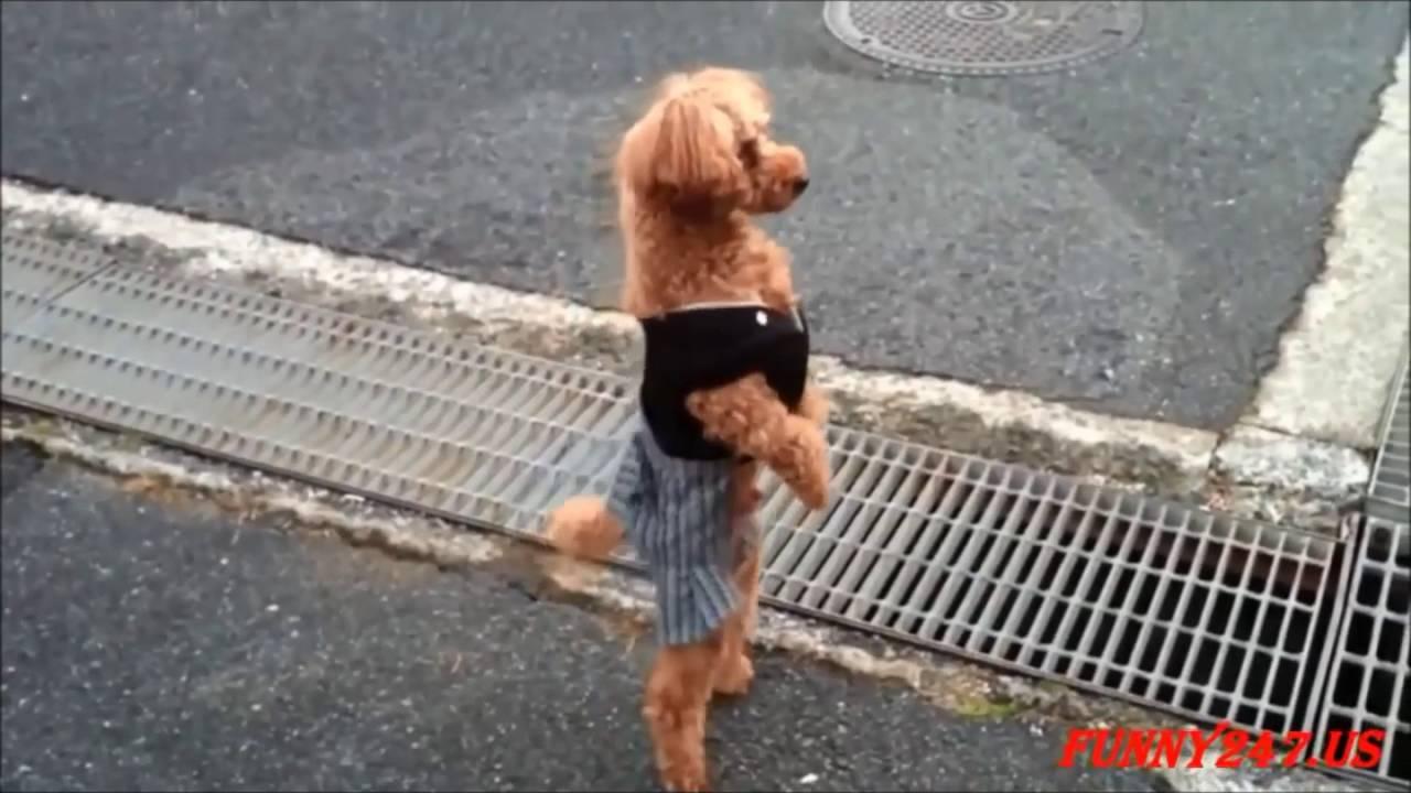 musica de wilfrido vargas el baile del perrito